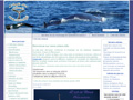 Baleines, Dauphins, Cachalots, Orques et Marsouins